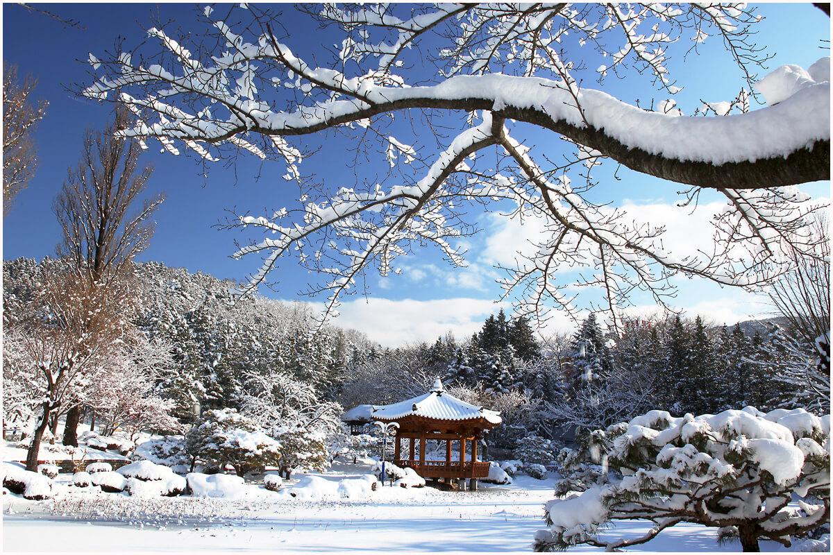 samhansaon-begini-cuaca-saat-musim-dingin-korea